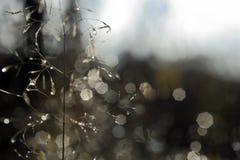 δροσοσταλίδες Στοκ εικόνα με δικαίωμα ελεύθερης χρήσης