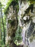 Ρουμανική φυσική επιφύλαξη βουνών Στοκ εικόνα με δικαίωμα ελεύθερης χρήσης