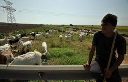 Ρουμανικός ποιμένας με τα πρόβατα και τις αίγες Στοκ εικόνα με δικαίωμα ελεύθερης χρήσης