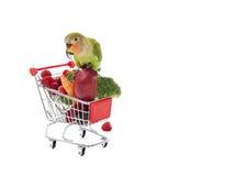 Ροδάκινο-αντιμέτωπο Lovebird που σκαρφαλώνει στο κάρρο αγορών Στοκ φωτογραφία με δικαίωμα ελεύθερης χρήσης