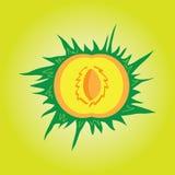 Ροδάκινο κινούμενων σχεδίων η φέτα μέσα σε ένα ανοικτό πράσινο υπόβαθρο Στοκ φωτογραφία με δικαίωμα ελεύθερης χρήσης