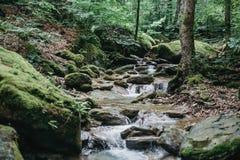 Ρυάκι στο θερινό δάσος Στοκ εικόνες με δικαίωμα ελεύθερης χρήσης