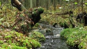 Ρυάκι στο πράσινο τροπικό δάσος απόθεμα βίντεο