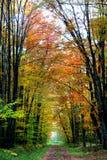 ρυθμιστής φθινοπώρου Στοκ Φωτογραφίες
