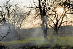 Ρωγμές του φλοιού φρούτων στην ομίχλη στοκ φωτογραφία με δικαίωμα ελεύθερης χρήσης