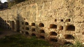 Ρωμαίος thombs στοκ εικόνα