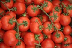 ρωμαϊκές ντομάτες Στοκ φωτογραφία με δικαίωμα ελεύθερης χρήσης