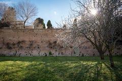 ρωμαϊκός τοίχος Στοκ εικόνα με δικαίωμα ελεύθερης χρήσης