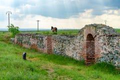 Ρωμαϊκός φύλακας πόλεων σε Histria στοκ φωτογραφία με δικαίωμα ελεύθερης χρήσης