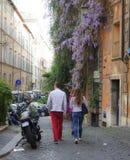 Ρωμαϊκό wisteria Στοκ εικόνες με δικαίωμα ελεύθερης χρήσης