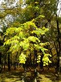 Ρωσία Πάρκο Στοκ Φωτογραφίες
