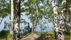 Ρωσία Σιβηρία, χαμηλωμένοι σημύδα κλάδοι στον ποταμό Στοκ Φωτογραφίες