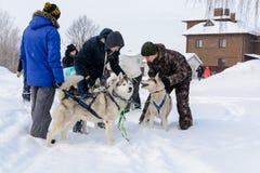 Ρωσία kazan 14 Φεβρουαρίου Ομάδα ελκήθρων σκυλιών των σιβηρικών huskies που έξω στο χιόνι που τραβά ένα έλκηθρο που είναι από το  Στοκ Φωτογραφίες