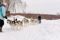 Ρωσία kazan 14 Φεβρουαρίου Ομάδα ελκήθρων σκυλιών των σιβηρικών huskies που έξω στο χιόνι που τραβά ένα έλκηθρο που είναι από το  Στοκ Φωτογραφία