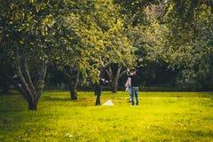 ΡΩΣΙΑ, ΜΟΣΧΑ, 01 09 2017: Άνθρωποι που επιλέγουν τα μήλα Στοκ Εικόνες