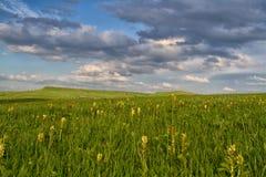 Ρωσικά πράσινα βουνά Καύκασου Στοκ εικόνες με δικαίωμα ελεύθερης χρήσης