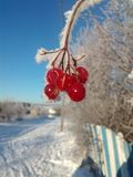 Ρωσικές κρύες φυλές ομορφιάς στοκ εικόνες