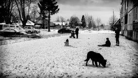 Ρωσική αστική ζωή για τα σκυλιά και τις γιαγιάδες παιδιών Στοκ φωτογραφία με δικαίωμα ελεύθερης χρήσης