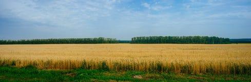 Ρωσική μητέρα πατρίδα - ρωσική επαρχία 9 στοκ φωτογραφία