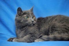 Ρωσική μπλε γάτα Στοκ φωτογραφία με δικαίωμα ελεύθερης χρήσης