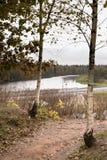 Ρωσική σημύδα και άποψη του ποταμού στα τέλη του φθινοπώρου στοκ εικόνα με δικαίωμα ελεύθερης χρήσης