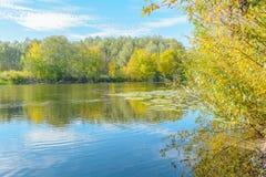ρωσικός άγριος κόσμος αγριοτήτων φύσης παπιών Στοκ Εικόνα