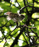 ρωσικός κόσμος αγριοτήτων φύσης κλάδων πουλιών Στοκ εικόνες με δικαίωμα ελεύθερης χρήσης