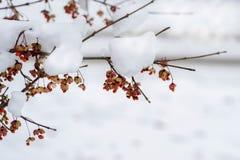 Ρωσικός χειμώνας, χιόνι στο δέντρο στοκ εικόνα με δικαίωμα ελεύθερης χρήσης