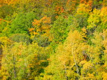 Ρωσικό δάσος Στοκ εικόνες με δικαίωμα ελεύθερης χρήσης