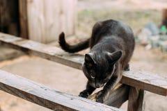 Ρωσικό μπλε γατάκι γατών με τα πράσινα μάτια που γρατσουνίζουν έναν ξύλινο πίνακα Στοκ φωτογραφία με δικαίωμα ελεύθερης χρήσης