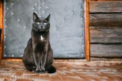 Ρωσικό μπλε γατάκι γατών που στηρίζεται στο μέρος ενός παλαιού χωριού αγροτικού Στοκ φωτογραφία με δικαίωμα ελεύθερης χρήσης