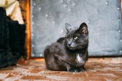 Ρωσικό μπλε γατάκι γατών που στηρίζεται στο μέρος ενός παλαιού χωριού αγροτικού Στοκ Εικόνα
