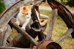 ρόδα γατών Στοκ φωτογραφίες με δικαίωμα ελεύθερης χρήσης