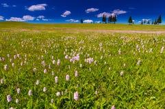 Ρόδινα άγρια λουλούδια σε ένα τοπίο λιβαδιών Στοκ φωτογραφία με δικαίωμα ελεύθερης χρήσης