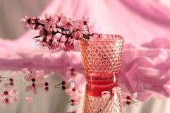 Ρόδινα άνθη κερασιών στοκ φωτογραφία με δικαίωμα ελεύθερης χρήσης