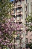 Ρόδινα άνθη στην πρόωρη άνοιξη στο Μιλάνο στοκ φωτογραφίες με δικαίωμα ελεύθερης χρήσης