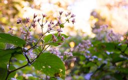 Ρόδινα και άσπρα λουλούδια με το μικρό bokeh στοκ φωτογραφίες με δικαίωμα ελεύθερης χρήσης