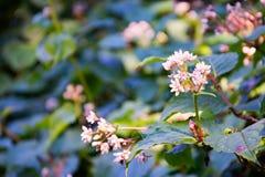 Ρόδινα και άσπρα λουλούδια με το μικρό bokeh στοκ εικόνα με δικαίωμα ελεύθερης χρήσης