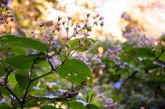 Ρόδινα και άσπρα λουλούδια με το μικρό bokeh στοκ εικόνα