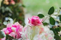 Ρόδινα και άσπρα τριαντάφυλλα Στοκ Εικόνα