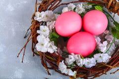 Ρόδινα και πορφυρά αυγά Πάσχας σε μια φωλιά με τα άσπρα λουλούδια σε ένα γκρίζο συγκεκριμένο υπόβαθρο Στοκ Φωτογραφίες