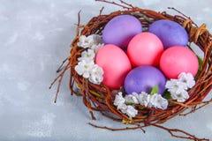 Ρόδινα και πορφυρά αυγά Πάσχας σε μια φωλιά με τα άσπρα λουλούδια σε ένα γκρίζο συγκεκριμένο υπόβαθρο Στοκ φωτογραφία με δικαίωμα ελεύθερης χρήσης
