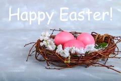 Ρόδινα και πορφυρά αυγά Πάσχας σε μια φωλιά με τα άσπρα λουλούδια σε ένα γκρίζο συγκεκριμένο υπόβαθρο Στοκ φωτογραφίες με δικαίωμα ελεύθερης χρήσης