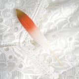 Ρόδινα κόκκινα επιχρυσωμένα χρυσά χρυσά φτερά που απομονώνονται στο άσπρο υπόβαθρο δαντελλών Στοκ φωτογραφία με δικαίωμα ελεύθερης χρήσης