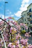 Ρόδινα λουλούδια άνοιξη στην αστική οδό στοκ εικόνες