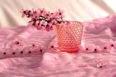 Ρόδινα λουλούδια ανθών κερασιών στοκ φωτογραφία με δικαίωμα ελεύθερης χρήσης