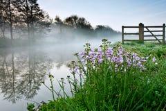 Ρόδινα λουλούδια από έναν Misty ποταμό στοκ εικόνα