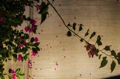 Ρόδινα λουλούδια με τα πράσινα φύλλα στα πλαίσια μιας οδού με τις διασχισμένες γραμμές στοκ φωτογραφίες