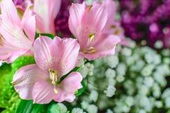 Ρόδινα λουλούδια με το θολωμένο πορφυρό και άσπρο υπόβαθρο Στοκ Εικόνες