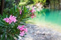 Ρόδινα λουλούδια πέρα από το υπόβαθρο ποταμών βουνών Στοκ εικόνα με δικαίωμα ελεύθερης χρήσης